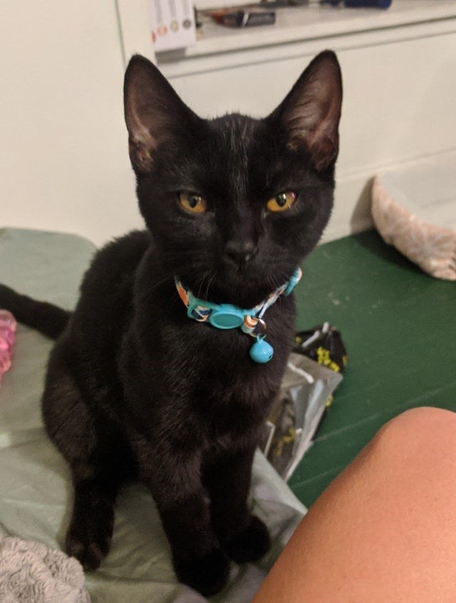 Cat - of
