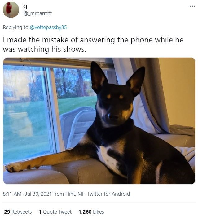 Dog - ... @_mrbarrett Replying to @vettepassby35 I made the mistake of answering the phone while he was watching his shows. 8:11 AM Jul 30, 2021 from Flint, MI - Twitter for Android 29 Retweets 1 Quote Tweet 1,260 Likes