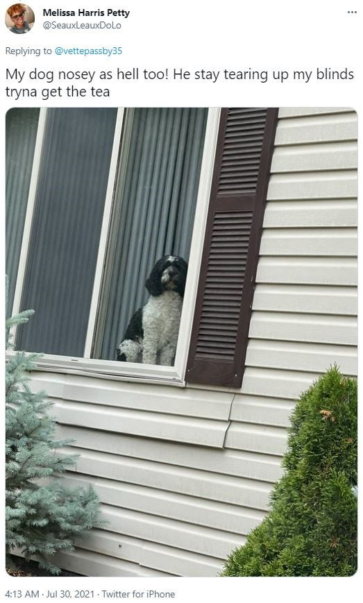 Property - Melissa Harris Petty ... @SeauxleauxDoLo Replying to @vettepassby35 My dog nosey as hell too! He stay tearing up my blinds tryna get the tea 4:13 AM Jul 30, 2021 - Twitter for iPhone