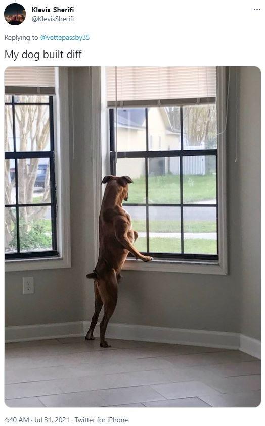 Window - Klevis Sherifi ... @KlevisSherifi Replying to @vettepassby35 My dog built diff 4:40 AM - Jul 31, 2021 - Twitter for iPhone