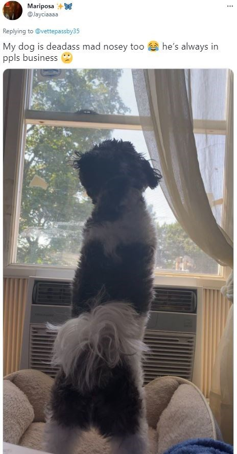 Dog - Mariposa @Jayciaaaa ... Replying to @vettepassby35 My dog is deadass mad nosey too a he's always in ppls business