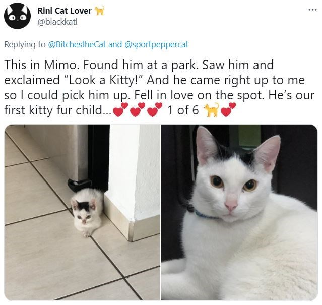 """Cat - Rini Cat Lover ... @blackkatl Replying to @BitchestheCat and @sportpeppercat This in Mimo. Found him at a park. Saw him and exclaimed """"Look a Kitty!"""" And he came right up to me so I could pick him up. Fell in love on the spot. He's our first kitty fur child... 1 of 6"""