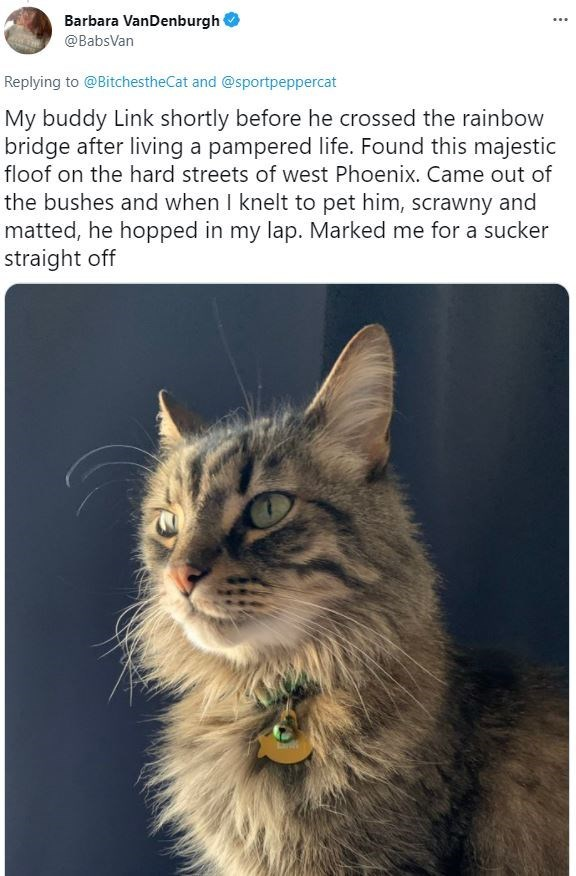 Cat - Barbara VanDenburgh ... @BabsVan Replying to @BitchestheCat and @sportpeppercat My buddy Link shortly before he crossed the rainbow bridge after living a pampered life. Found this majestic floof on the hard streets of west Phoenix. Came out of the bushes and when I knelt to pet him, scrawny and matted, he hopped in my lap. Marked me for a sucker straight off