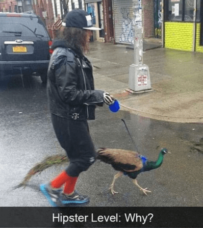 Bird - Hipster Level: Why?