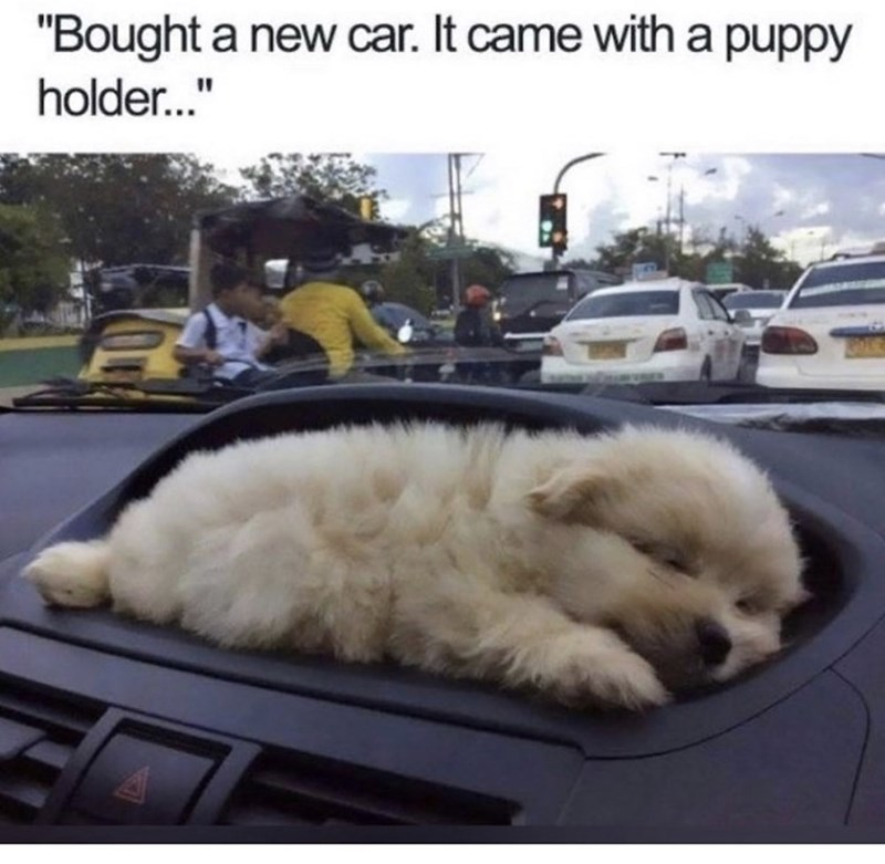 """Dog - """"Bought a new car. It came with a puppy holder."""""""