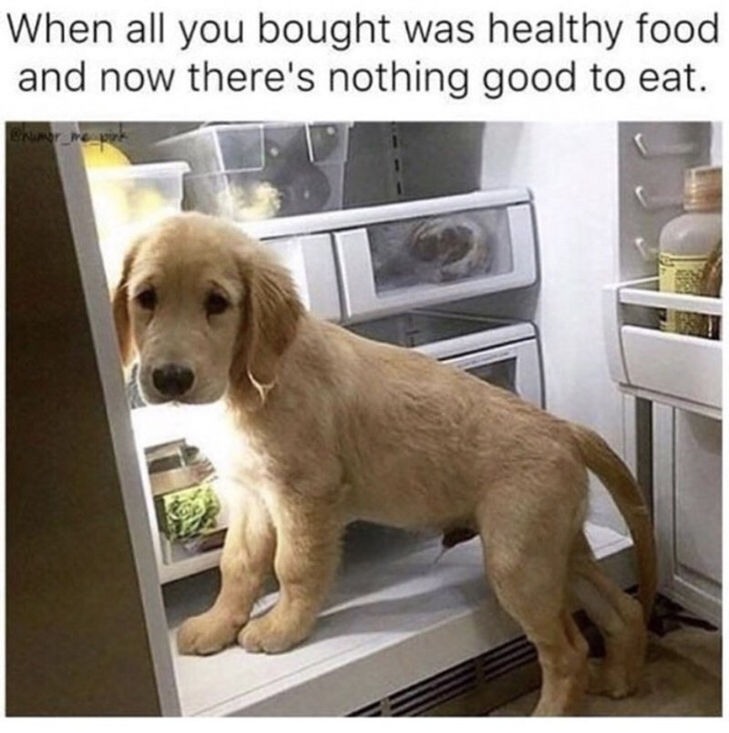 Dog - When all you bought was healthy food and now there's nothing good to eat.