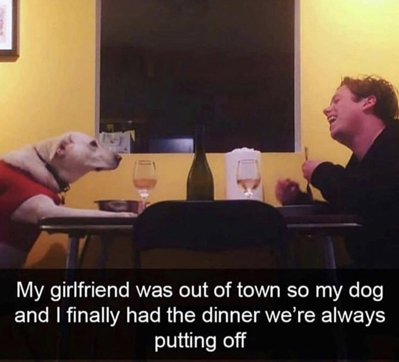 Furniture - My girlfriend was out of town so my dog and I finally had the dinner we're always putting off