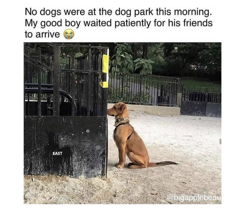Dog - No dogs were at the dog park this morning. My good boy waited patiently for his friends to arrive EAST @bigapplebeau