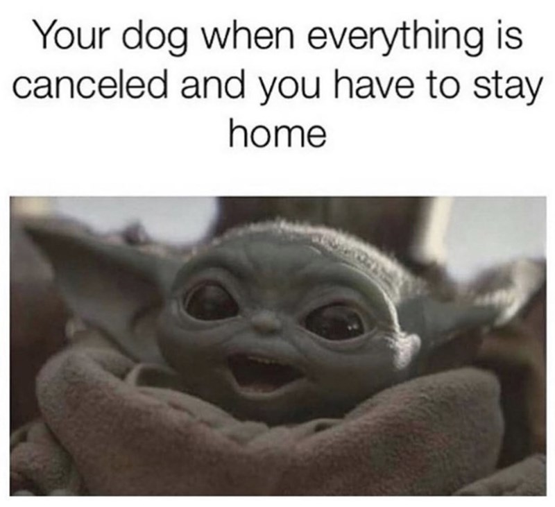 Smile - Your dog when everything is canceled and you have to stay home