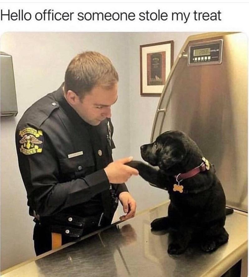 Dog - Hello officer someone stole my treat