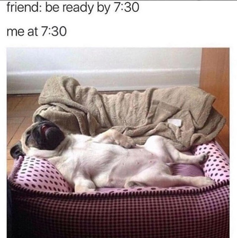 Dog - friend: be ready by 7:30 me at 7:30