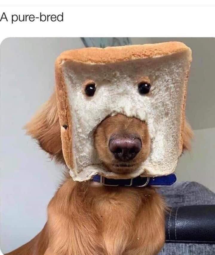 Dog - A pure-bred