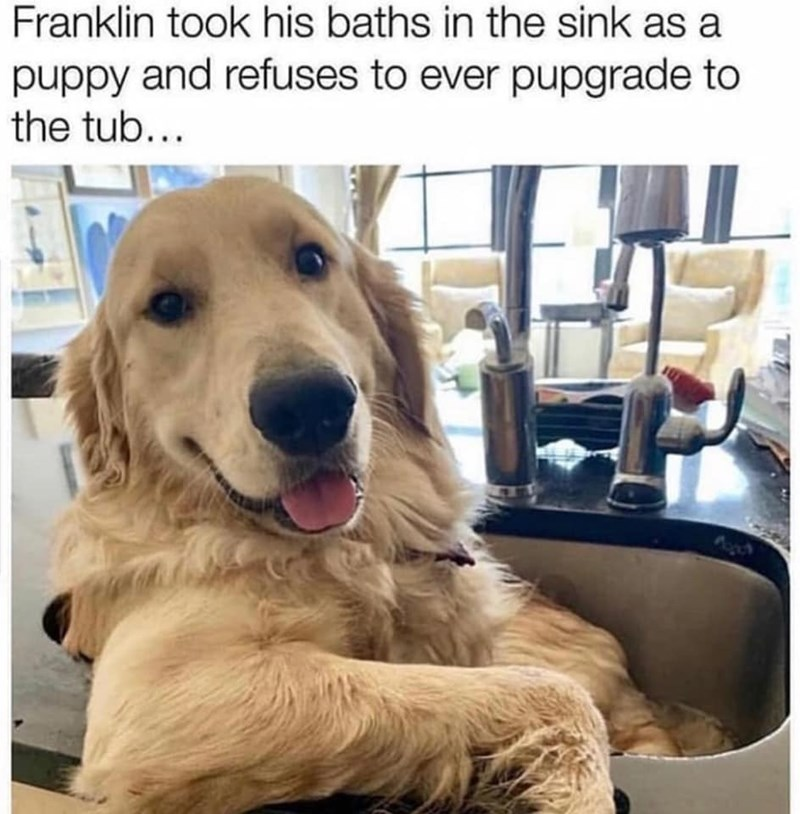 Dog - Franklin took his baths in the sink as a puppy and refuses to ever pupgrade to the tub...