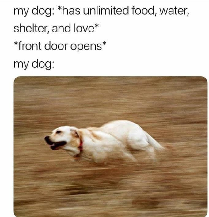 Dog - my dog: *has unlimited food, water, shelter, and love* *front door opens* my dog: