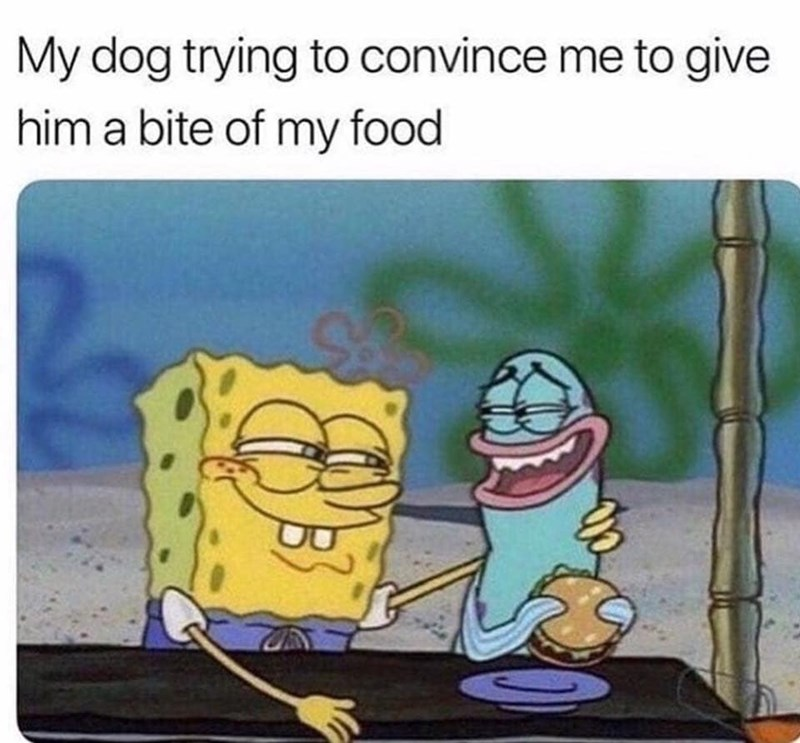 Cartoon - My dog trying to convince me to give him a bite of my food