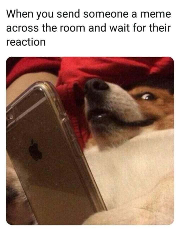 Dog - When you send someone a meme across the room and wait for their reaction