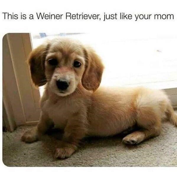 Dog - This is a Weiner Retriever, just like your mom
