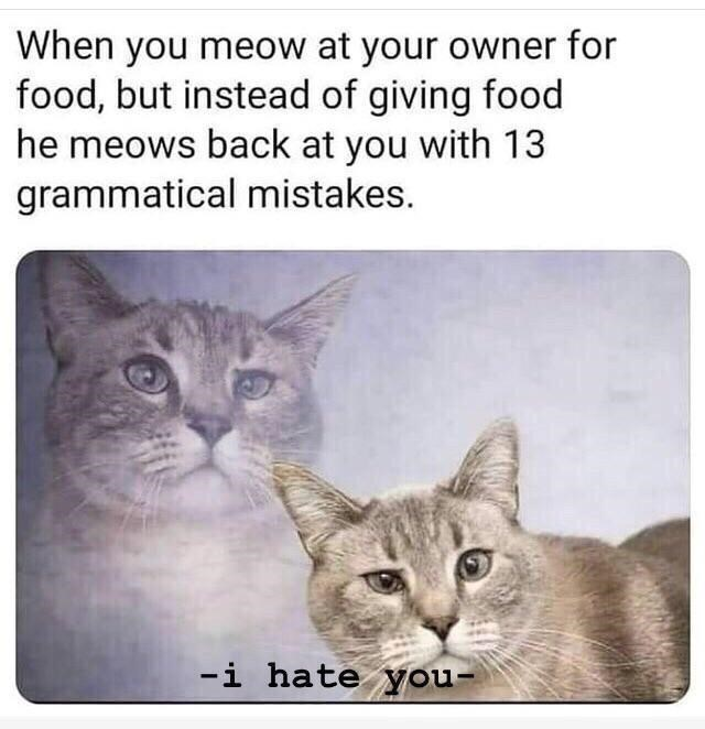 Cat - When you meow at your owner for food, but instead of giving food he meows back at you with 13 grammatical mistakes. -i hate you-