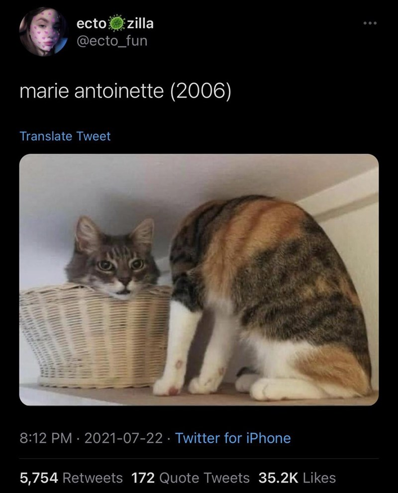 Cat - ecto zilla @ecto_fun marie antoinette (2006) Translate Tweet 8:12 PM · 2021-07-22 · Twitter for iPhone 5,754 Retweets 172 Quote Tweets 35.2K Likes