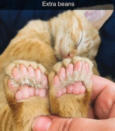 Nose - Extra beans