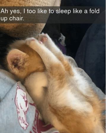 Dog - Ah yes, I too like to sleep like a fold up chair.