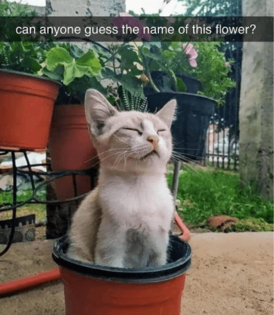 Cat - can anyone guess the name of this flower?