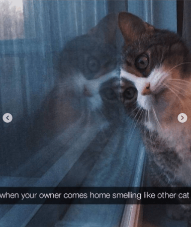 Cat - when your owner comes home smelling like other cat