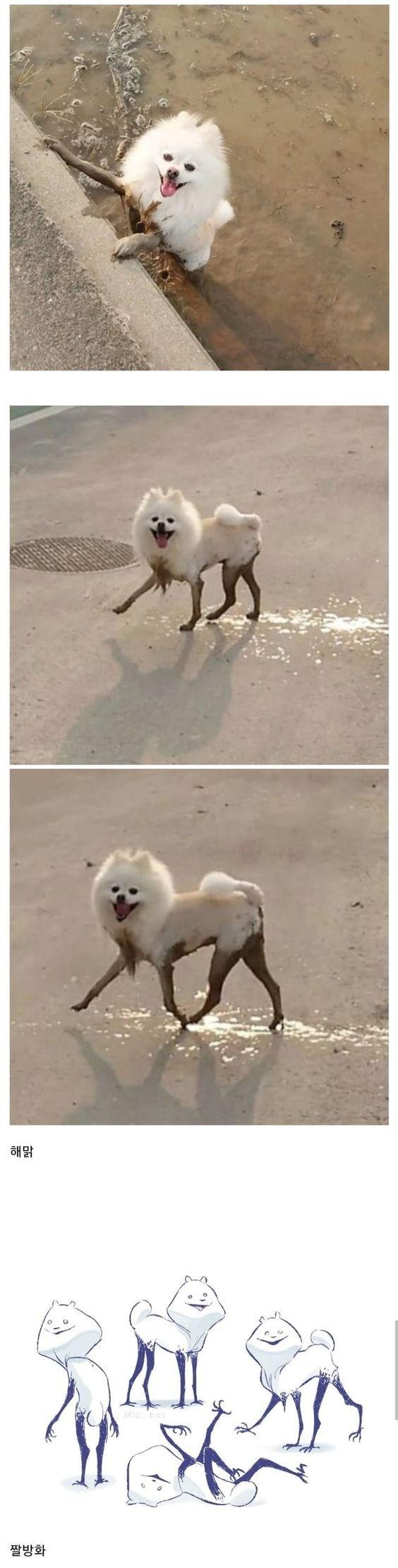 Dog - 해맑 짤방화