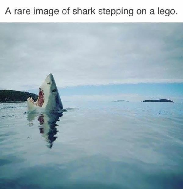 Water - A rare image of shark stepping on a lego.