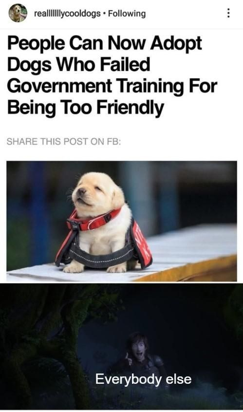 Dog - realllycooldogs Following People Can Now Adopt Dogs Who Failed Government Training For Being Too Friendly SHARE THIS POST ON FB: Everybody else