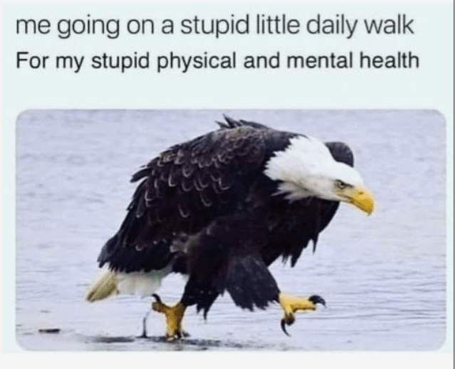 Bird - me going on a stupid little daily walk For my stupid physical and mental health