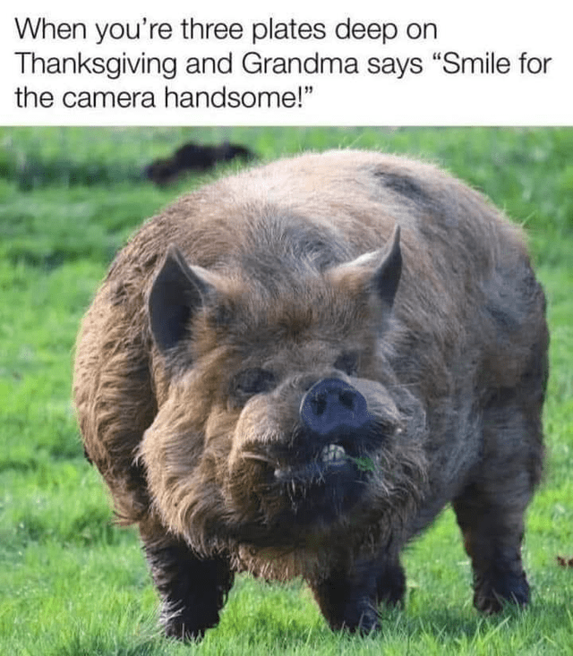 """Grass - When you're three plates deep on Thanksgiving and Grandma says """"Smile for the camera handsome!"""""""