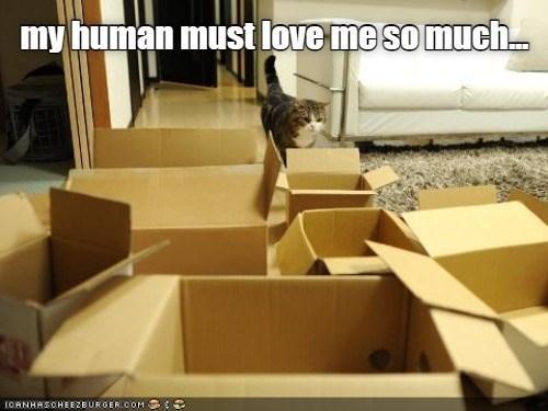 Shipping box - my human must love me so much. IOANHASCHEEZEURGERCOM
