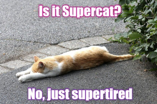 Cat - Is it Supercat? No, just supertired