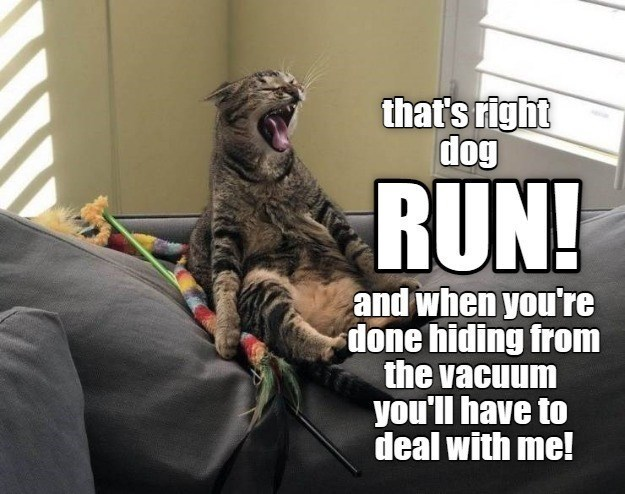 Felidae - that's right dog RUN! and when you're done hiding from the vacuum you'll have to deal with me!