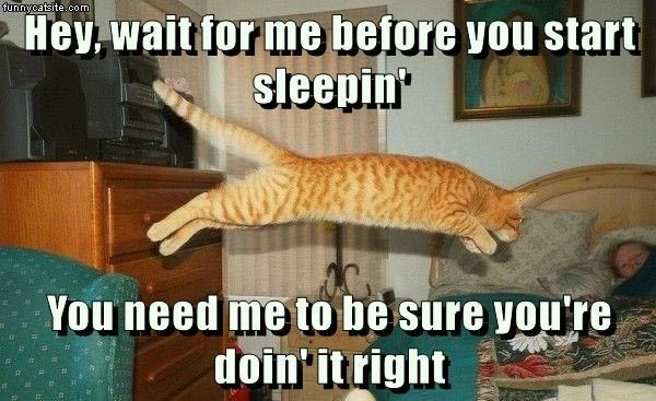 Cat - funnycatsite.com Hey, wait for me before you start sleepin You need me to be sure you're doin'it right