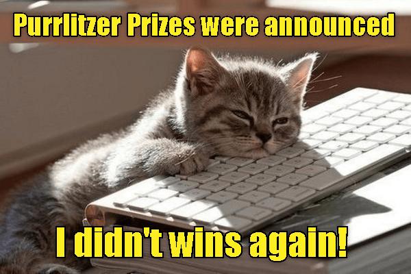 Cat - Purrlitzer Prizes were announced I didn't wins again!