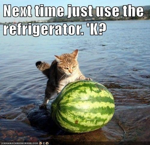 Water - Next time justuse the refrigerator. 'K? ICANHASCHEEZBURGER.COM