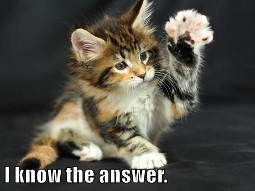 Cat - I knów the answer.