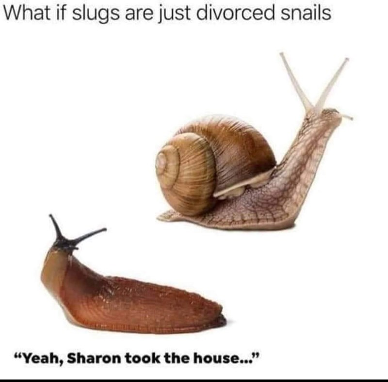 """Snail - What if slugs are just divorced snails """"Yeah, Sharon took the house..."""""""