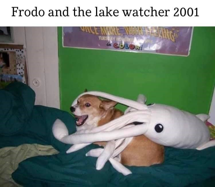 Dog - Frodo and the lake watcher 2001 MARE TUESY OVE in COLOR!