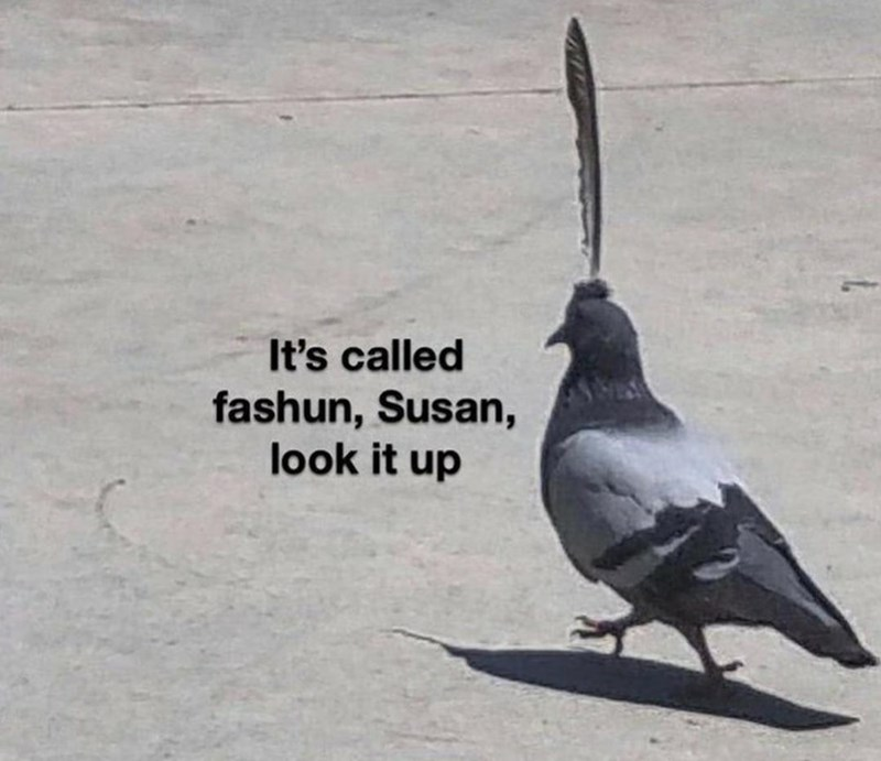 Bird - It's called fashun, Susan, look it up