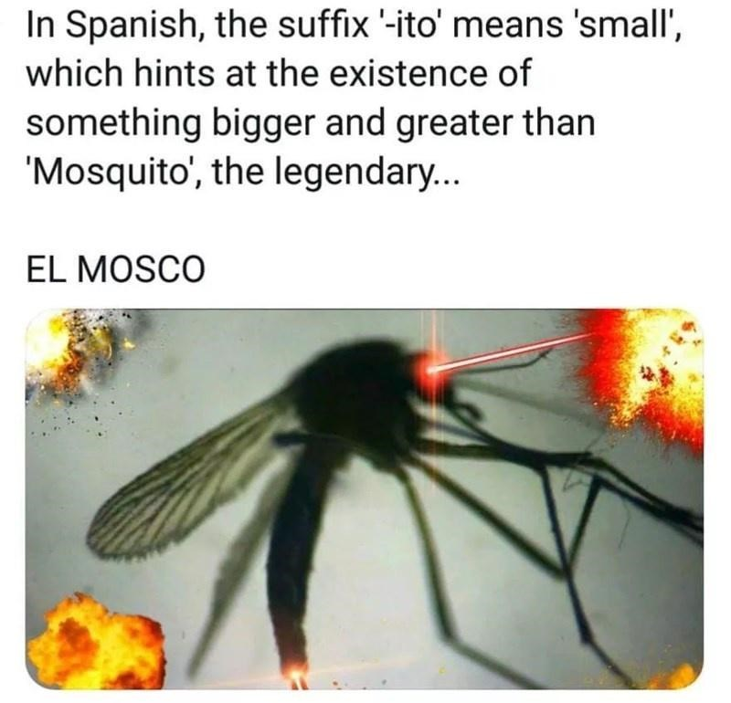 Insect - In Spanish, the suffix '-ito' means 'small', which hints at the existence of something bigger and greater than 'Mosquito', the legendary... EL MOSCO