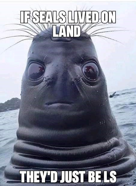 Head - FSEALS LIVED ON LAND THEY'D JUST BE LS Jengmom