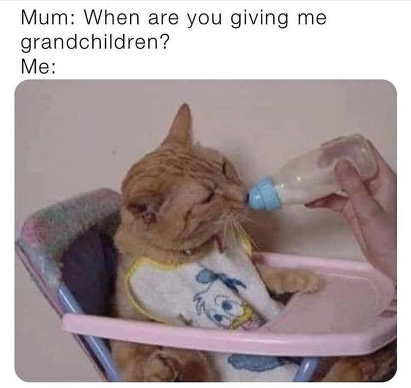 Cat - Mum: When are you giving me grandchildren? Me: