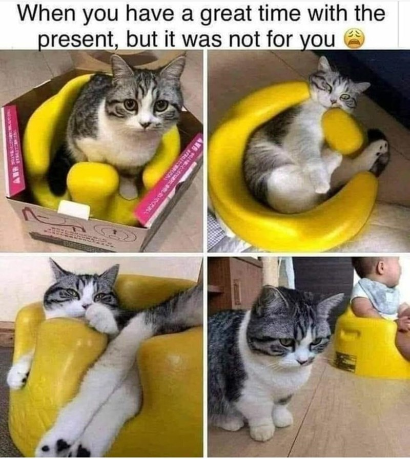 Cat - When you have a great time with the present, but it was not for you