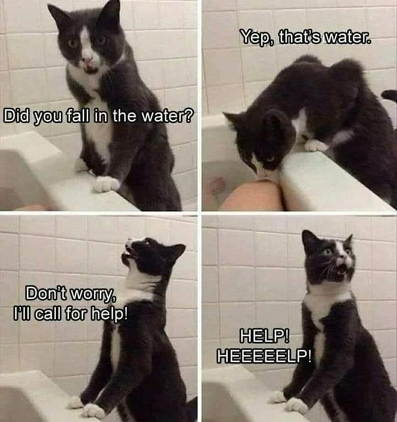 Cat - Yep, that's water. Did you fall in the water? Don't worry, Ol call for help! HELP! HEEEEELP!