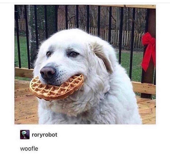 Dog - roryrobot woofle