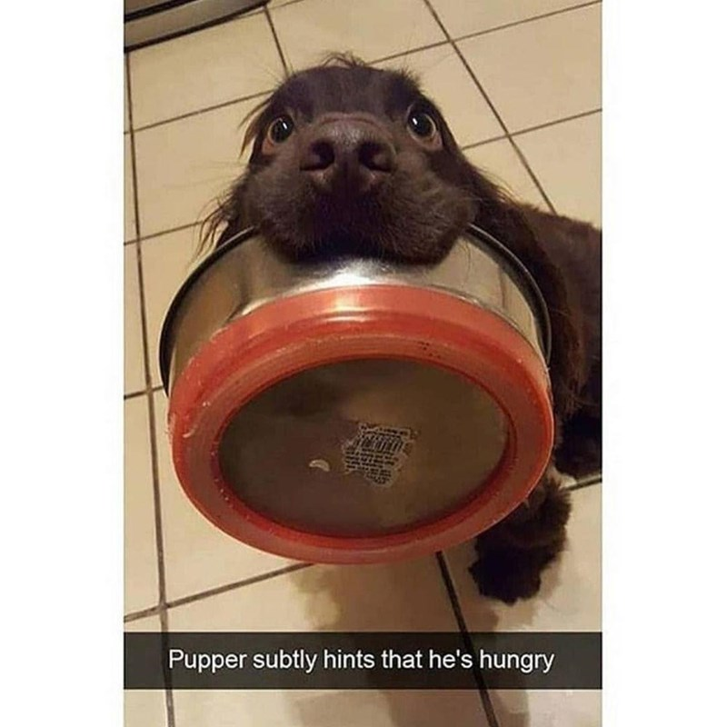 Jaw - Pupper subtly hints that he's hungry