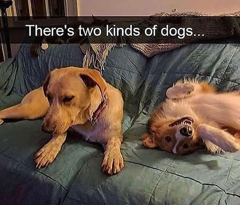 Dog - There's two kinds of dogs...